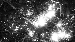 Sol que brilla a través de un toldo de la selva - texto blanco y negro almacen de video