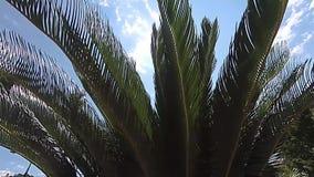 Sol que viene a través de hojas de palma grandes en un día soleado en verano almacen de video