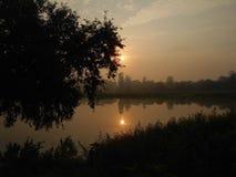 Sol reflector detrás del árbol imagen de archivo libre de regalías