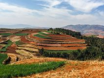 Sol rouge de Dongchuan (Hongtudi), Yunnan, Chine Photo stock