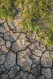 Sol sec avec de la mousse verte image libre de droits