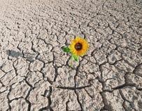 Sol sec et usine croissante Photographie stock libre de droits