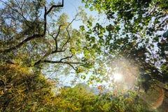 Sol sobre la naturaleza tropical Fotografía de archivo