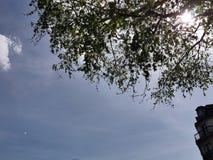 Sol sobre las hojas imágenes de archivo libres de regalías