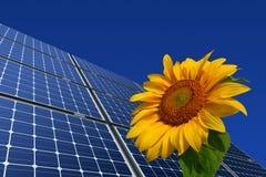 sol- solros för crystalline mono paneler arkivbilder