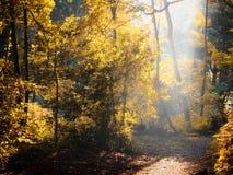 Sol som ändå skiner en röjning i höstskogsmark royaltyfria foton