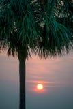 Sol som bakifrån skiner ett Palmettoträd Arkivbild