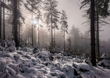 Sol som bryter till och med dimman Royaltyfri Bild