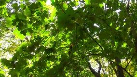 Sol som bryter till och med gröna sidor