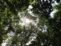 Sol som döljas bland träden Royaltyfria Bilder