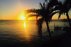 Sol som går ner i Key Biscayne Florida med främsta palmträd royaltyfri fotografi