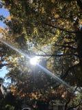 Sol som glimmar till och med nedgångträden arkivfoto