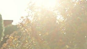 Sol som glimmar till och med ormbunkar som spårar, dockaskott stock video