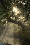 Sol som når en höjdpunkt till och med träd på floden Royaltyfria Foton