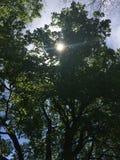Sol som når en höjdpunkt till och med träden Arkivbild