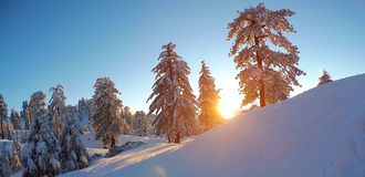 Sol som Shinning till och med träden Royaltyfri Fotografi