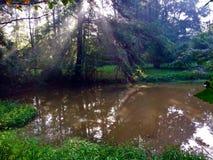 Sol som skiner över ett damm i ett träsk Arkivfoto