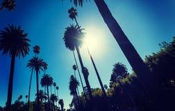 Sol som skiner över högväxta palmträd i Los Angeles arkivbild