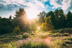 Sol som skiner ovanför blommaträdgård i solig sommarafton Blomma Fotografering för Bildbyråer