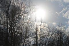 Sol som skiner på gräs Royaltyfri Foto