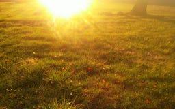 Sol som skiner på vått gräs Arkivbilder