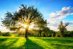 Sol som skiner till och med ett träd i lantligt landskap arkivbild