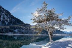 Sol som skiner till och med ett träd på sjön Davos royaltyfri foto