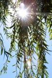 Sol som skiner till och med filialer av en pil Arkivbild