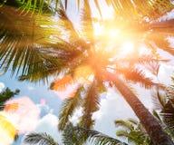 Sol som skiner till och med kokosnötpalmträd med reflexioner på backg Arkivbild