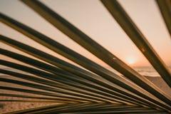 Sol som skiner till och med sidor av palmträdet royaltyfri foto