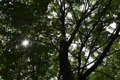 Sol som skiner till och med träd med den lilla Lens signalljuset royaltyfri foto