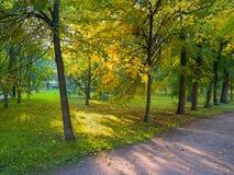 Sol som skiner till och med träden på en bana royaltyfri bild