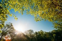 Sol som skiner under vårmarkisen av trädet Lövskog sommar Royaltyfri Fotografi