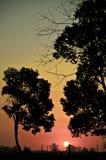 Sol som ställer in över fält Arkivfoto