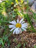 Sol, sommar och blommor arkivbilder