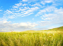 sol- sommartid för fält Royaltyfria Bilder