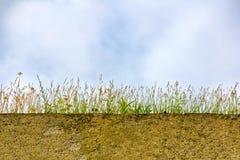 Sol sous l'herbe grandissante Photo stock