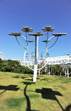 sol- strukturtree Arkivbild
