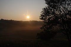 Sol till och med dimma och träd Arkivbild