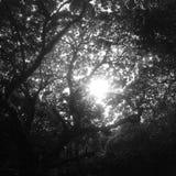 Sol till och med en markis av träd Royaltyfri Bild