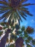 Sol till och med palmträdet Fotografering för Bildbyråer