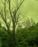 Sol till och med träd som tas med ett grön/gulinglinsfilter Arkivbild