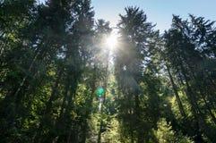 Sol till och med träden arkivbilder