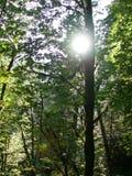 Sol till och med träden Arkivfoto