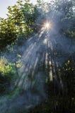 Sol till och med trädet fotografering för bildbyråer