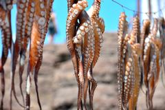 Sol torkad bläckfisk Royaltyfri Bild