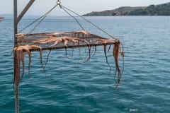 Sol torkad bläckfisk i Grekland arkivfoto