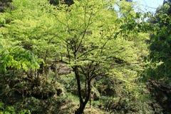 Sol- träd Royaltyfria Bilder