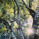 Sol a través de árboles foto de archivo