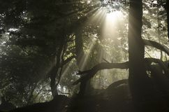 Sol a través de árboles Foto de archivo libre de regalías